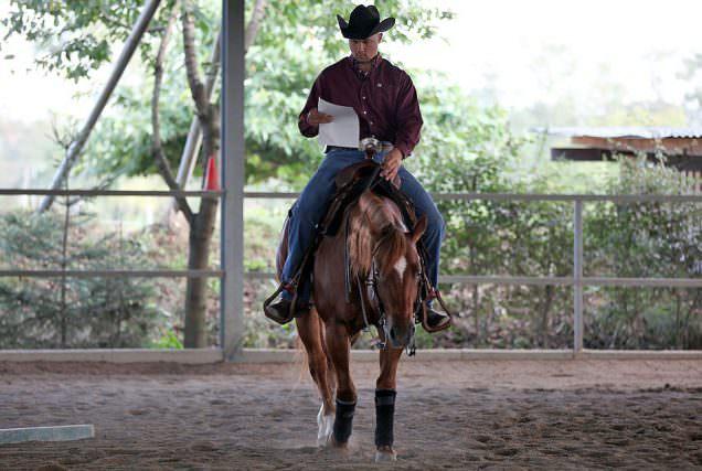 Reitübungen mit Felix Schnabel: Quarter Horse Hengst Gunner Be Good.