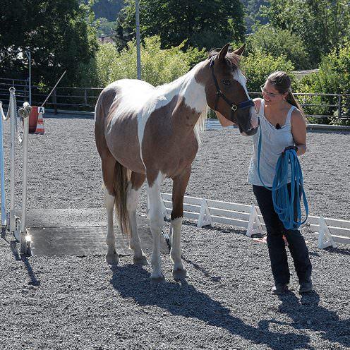 Sonja Kutter nahm 2018 zum ersten Mal am Mustang Makeover teil - bei der Jungpferdechallenge. Der kleine Schecke hat dabei ihr Herz im Sturm erobert.