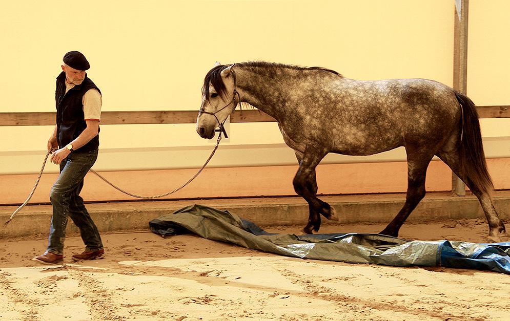 PeterPfister Horsemanship