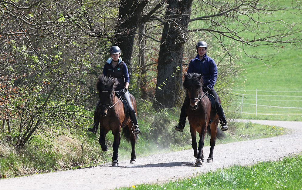 Reitbeteiligung bei Pferden - Grundlegende Informationen