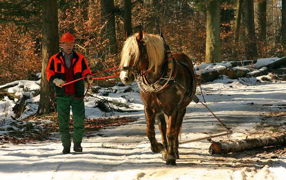 Wieso arbeitet man im Wald denn noch mit Pferden, warum werden die Vierbeiner noch zum Holzrücken eingesetzt? Das beantwortet dieser Artikel.