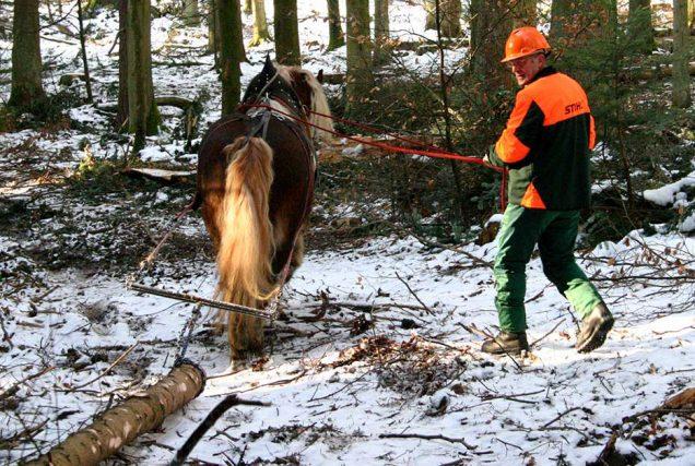 Welche körperlichen und charakteristischen Voraussetzungen ein Pferd mitbringen muss und wie das Training aussehen kann, erfährst du hier.