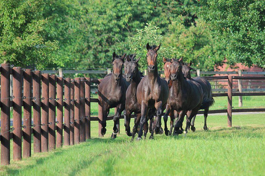 Pferde schneiden bei der Ökobilanz schlecht ab.