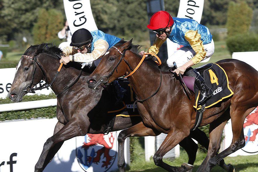 Pferderennen am Ostermontag in Köln: Akribie gilt bei dem Rennen als Favoritin. Die dunkelbraune Stute ist im Februar 2016 geboren. © Marc Rühl