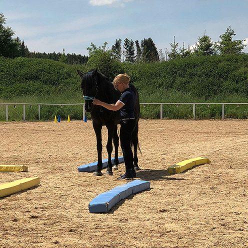 Wenn du und dein Pferd noch keine Erfahrung in der EquiClassic-Work bzw. der Handarbeit habt, solltet ihr ein paar Vorübungen machen.