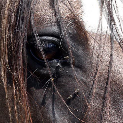 Fliegenmasken für Pferde