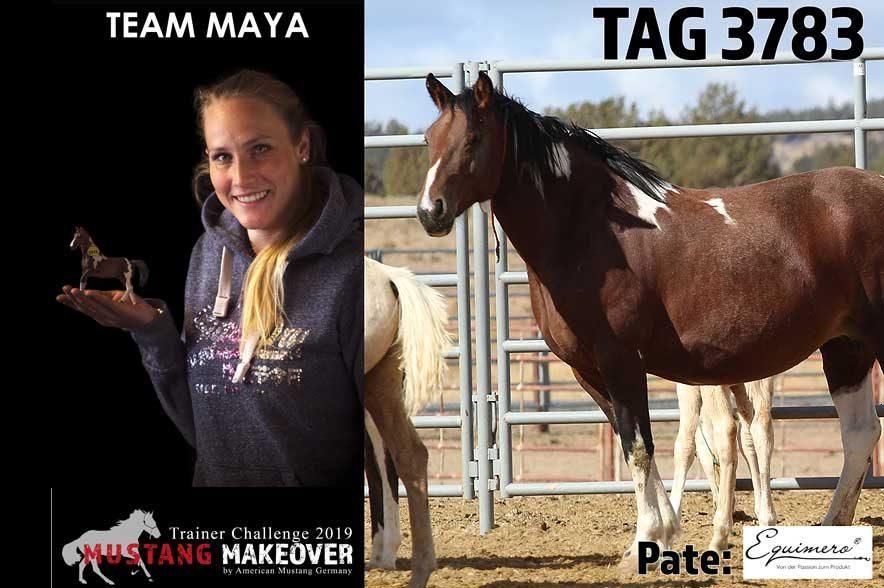 Mustang Makeover Auslosung: Team Maya