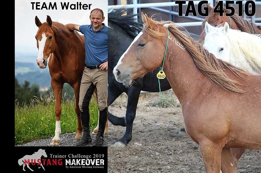 Mustang Makeover Auslosung: Team Walter