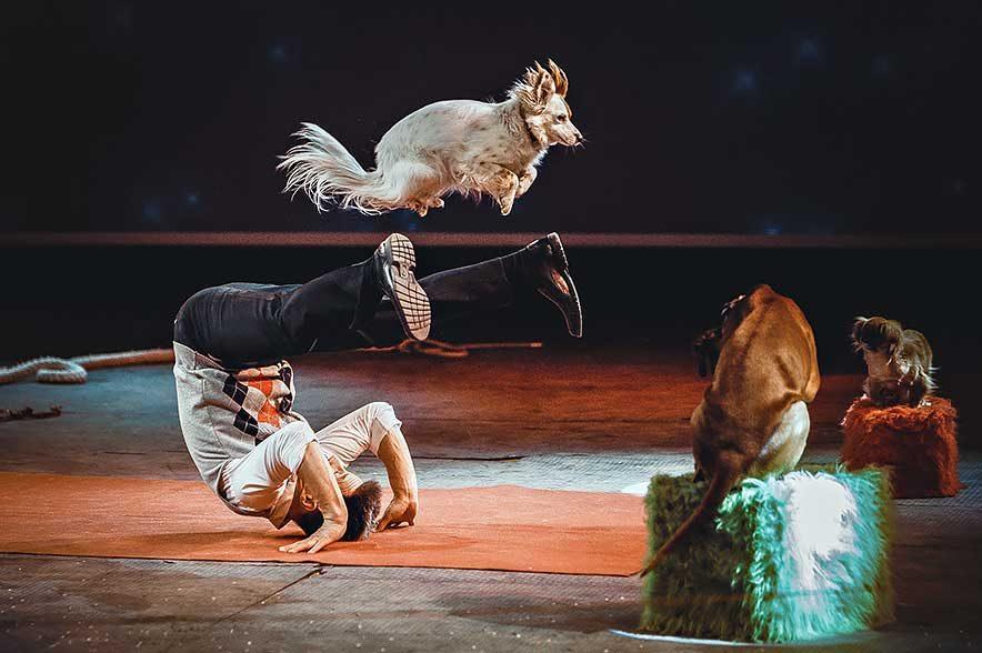 """Messe Pferd Wels: Bei der Pferdshow """"Nacht der Pferde"""" kommen auch Hundefans voll auf ihre Kosten. © Comedy Dog Show"""