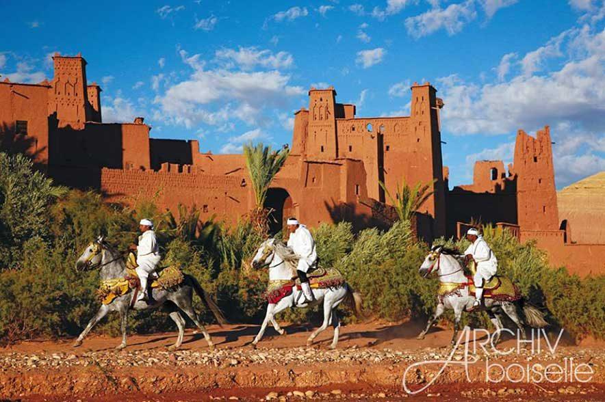 Berberpferdetreffen VFZB: Die Berber kommen ursprünglich aus Nordafrika und gehören zu den ältesten Pferderassen der Welt.