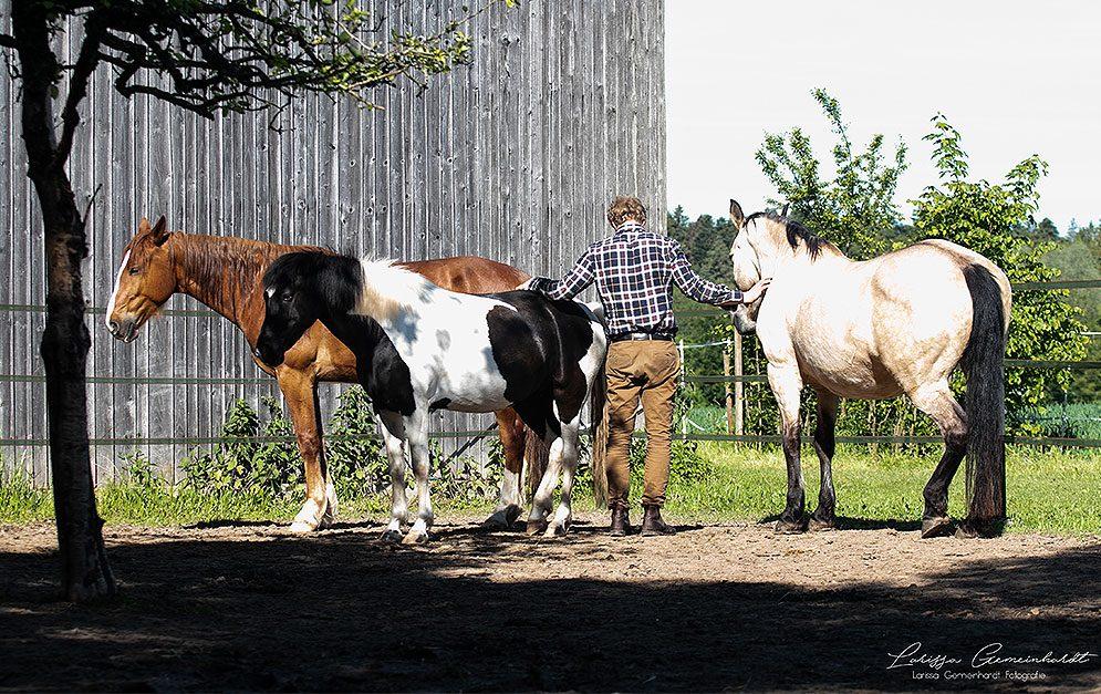 Horse Guided Empowerment® nutzt die Empathiefähigkeit und Intelligenz einer Pferdeherde, um Menschen zu helfen und zu coachen.