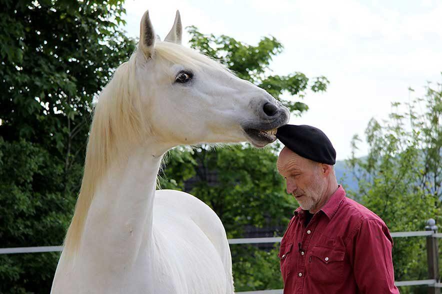 Ammerbucher Pferdefestival 2019: Mit seinen Auftritten und Shows begeistert Peter Pfister das Publikum auf vielen Messen und Veranstaltungen.