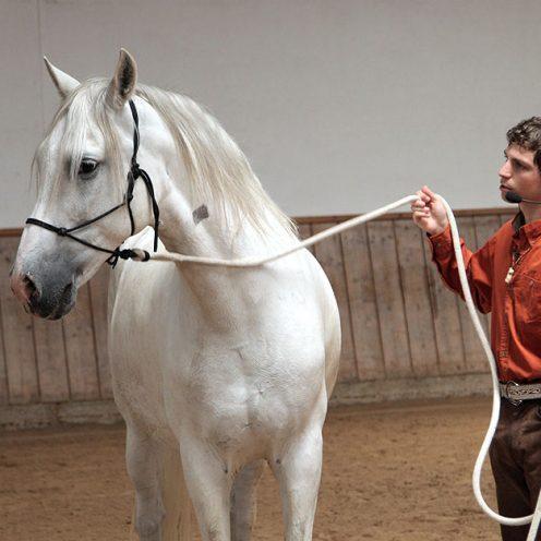 """""""Sobald ich den Strick löse, macht mein Pferd nicht mehr mit, bleibt stehen oder stellt sich in eine Ecke."""" Was tun? Das beantwortet Arien Aguilar."""