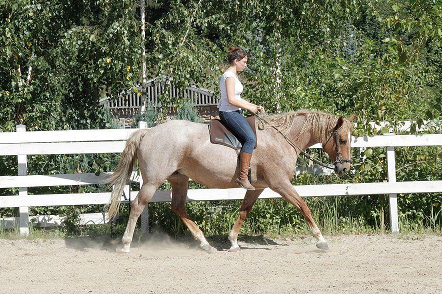 Wie verhält sich das Gewicht des Reiters auf dem Pferderücken, wenn man mit oder ohne Sattel reitet?