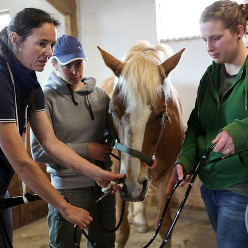 Magenspiegelung bei Pferden - Allgemeine Infos
