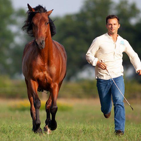 Unwille oder Schmerzen? Was kann ich tun, wenn mein Pferd ständig mit dem Schweif schlägt? Sebastian Nolewajka weiß Rat! © Sylvia Henglein