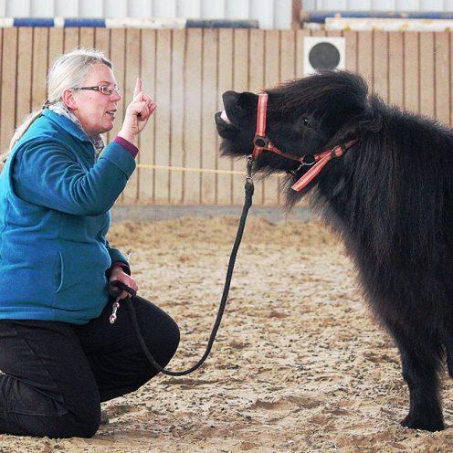 In der sechsten Folge stellen wir dir eine sehr leicht zu erarbeitende Zirkusübung vor: Das Lachen. In einem anschaulichen Lehrvideo geht Expertin Christine Konrad auf die einzelnen Trainingsschritte und Hilfen ein.