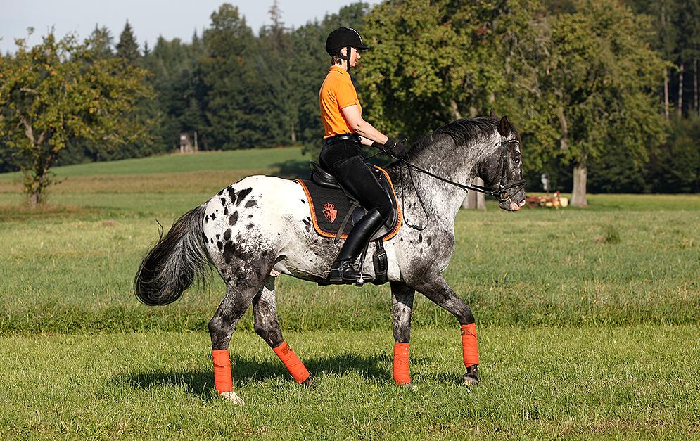 Was mache ich, wenn sich mein Pferd beim Angaloppieren mit dem Kopf nach oben aushebelt? Diese Frage beantwortet dir Dressurreiterin Sabine Ellinger.