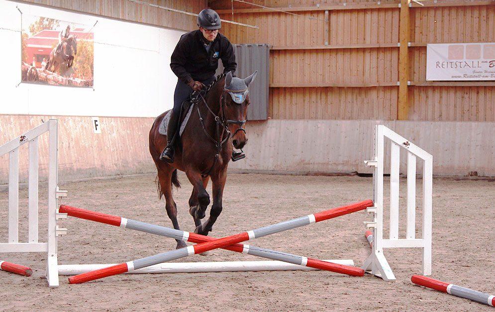 Die ersten Sprünge mit Reiter auf dem Rücken sind für junge Pferde eine neue Herausforderung.