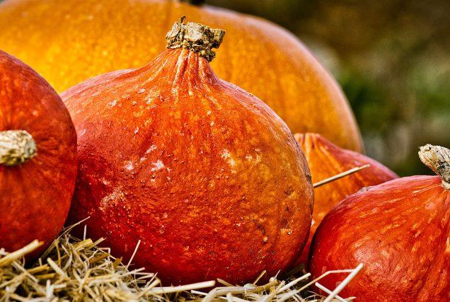 Gesund oder giftig? Der Herbst ist auch immer die Zeit für farbprächtige Kürbisse! Aber darf ich mein Pferd damit füttern?
