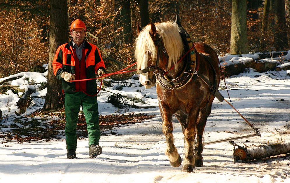 Kalender: Holzrücken