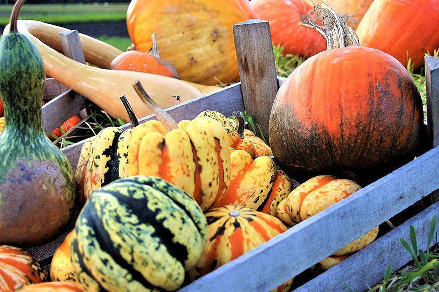 So bunt ist der Herbst - insgesamt gibt es mehr als 800 verschiedene Kürbissorten.