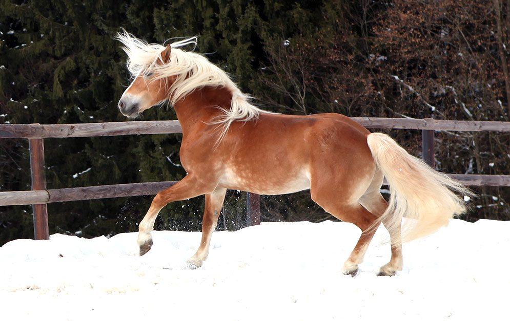Wann frieren unsere Pferde? Brauchen sie eine Decke?