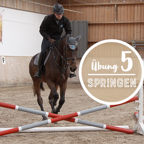 In einfachen Gymnastikreihen können sowohl Anfänger als auch erfahrene Reiter und Pferde einiges lernen.