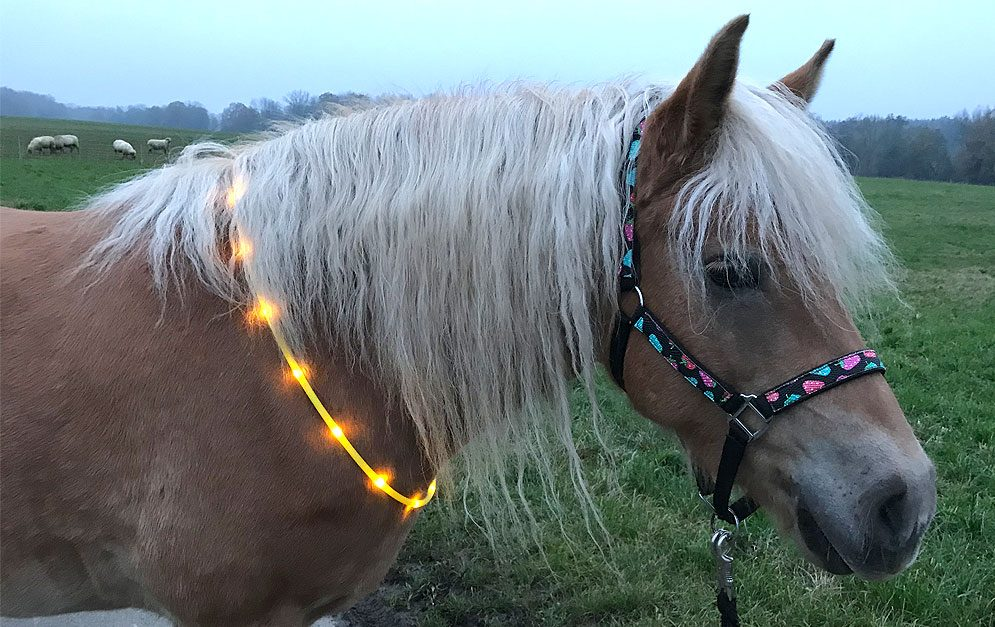 LED Leuchthalsring für's Pferd - Be safe mit Loesdau