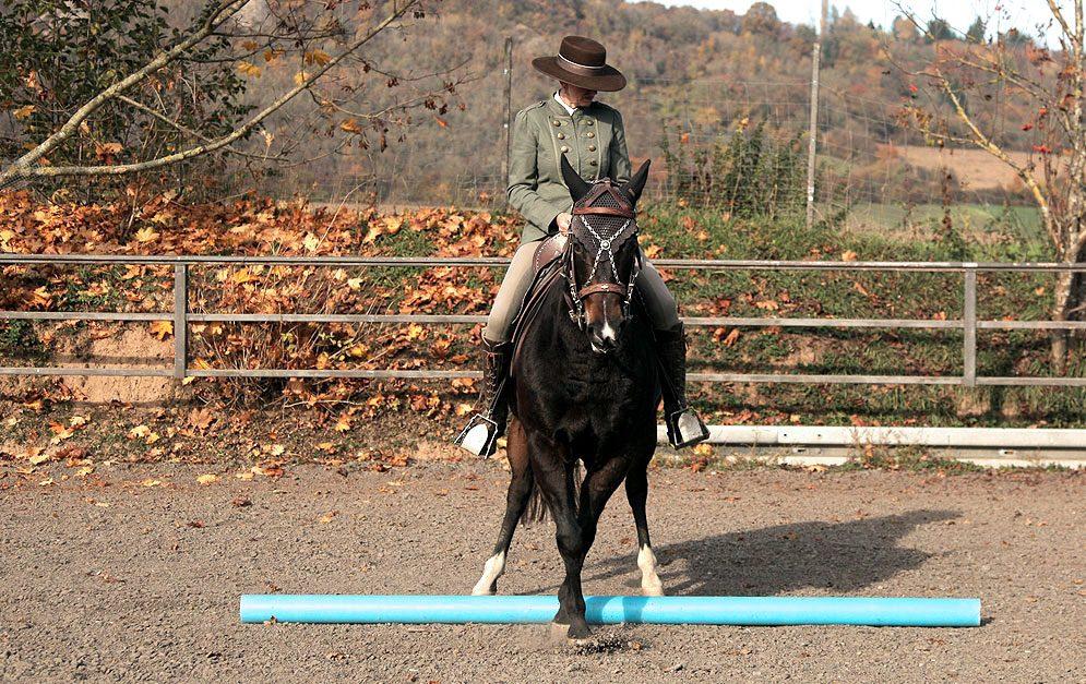 Reitübung: Side Pass - Das Pferd lernt seine Beine zu koordinieren und die Trittsicherheit wird verbessert.