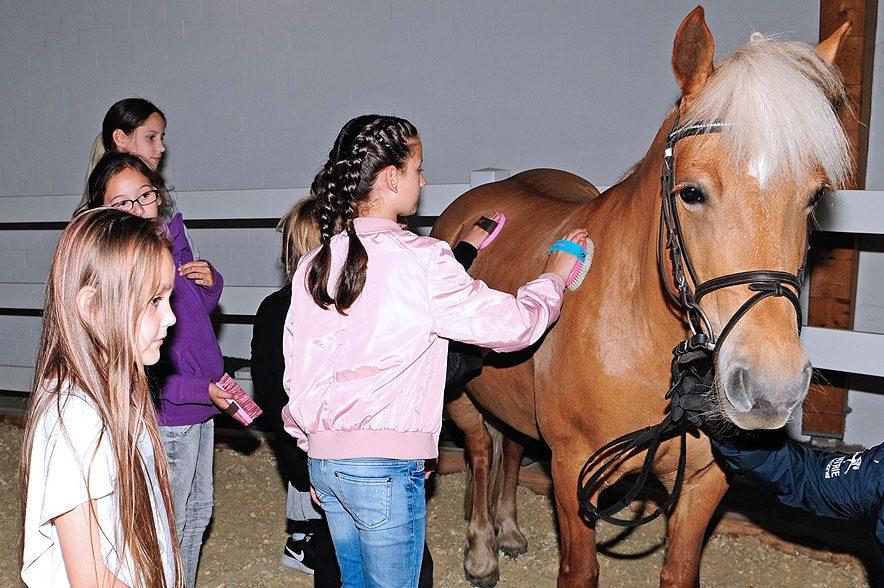 """Streicheln, Striegeln, Satteln – all das können Kinder bei der Aktion """"Ran ans Pferd!"""" im Westfälischen Pferdemuseum Münster erleben! © pferdemuseum.de"""