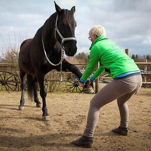 Dehnungsübungen für Pferde
