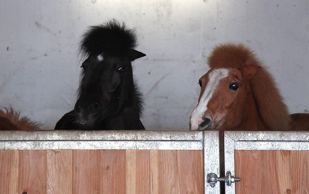 Gestresste Stallpferde