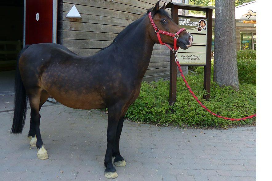 Bei der Kinder-Aktion darf das Museumspony Herkules keinesfalls fehlen. © pferdemuseum.de