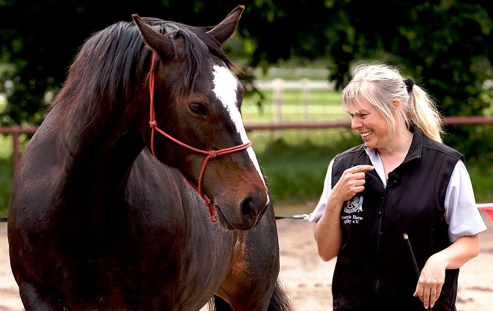 HorseAgility Wippe Header
