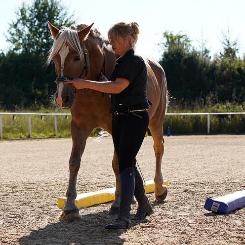 Viel erreichen mit wenig Aufwand - das geht mit dieser Übung. Du trainierst jede Seite, Biegung und Geraderichtung im Wechsel und machst dein Pferd fit für mehr. EquiClassic-Work - besser gehts nicht!