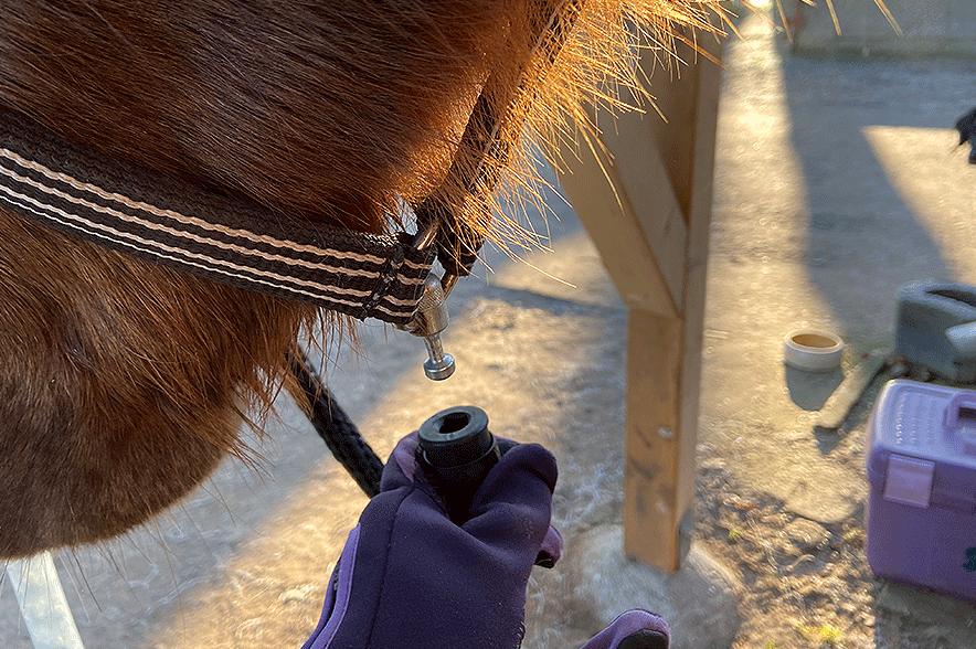 Selbst mit Handschuhen konnte Jessica ihre Nikita super einfach anbinden.