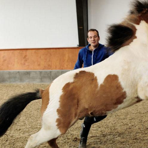 ▶ | Hilfe, mein Pferd lässt sich nicht anfassen! Woran liegt es, was man dagegen tun kann - unser Experte Luuk Teunissen weiß Rat.