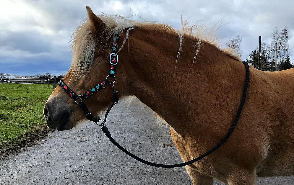 GOLEYGO hat ein neuartiges Verschlussystem für Pferdestricke und Hundeleinen auf den Markt gebracht - mit Magnet! Ob das hält? Wir haben getestet.