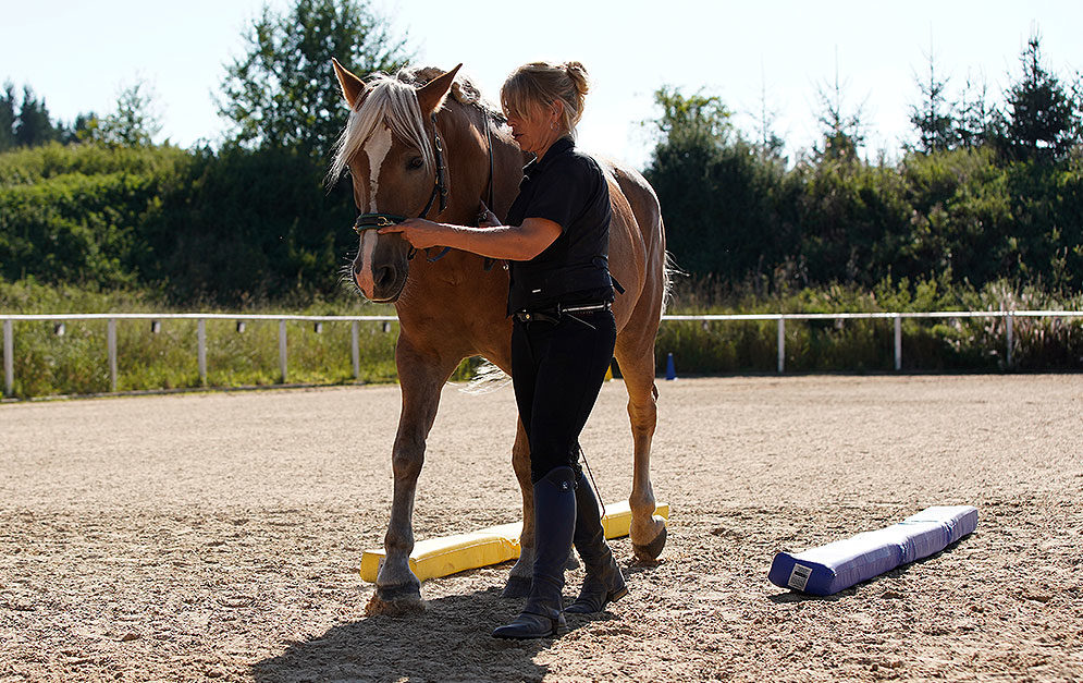▶ | Viel erreichen mit wenig Aufwand - das funktioniert mit dieser Übung hervorragend: Du trainierst jede Seite, Biegung und Geraderichtung im Wechsel und machst dein Pferd so noch fitter!