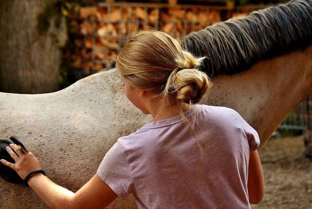 Warum oldschool zu putzen besser für Körper und Geist des Pferdes ist und wir keine 1000 Extra-Bürstchen brauchen.