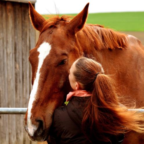 Darf ich noch zu meinem Pferd? Oder ausreiten? Was tun, wenn ich Ausgangssperre habe? Das und mehr Fragen beantworten wir dir in diesem Artikel.