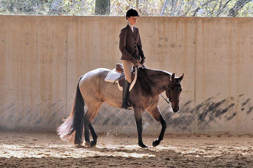 Westerndisziplin Hunter under Saddle: Im Trab muss der Reiter leichttraben. Wann er hierbei aufstehen und sich setzen muss, sollte er im Gefühl haben.