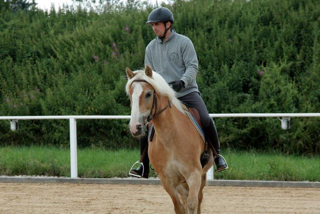 Falscher Knick durch falsche Ausbildung - das ist gar nicht so selten. Ausbilder Oliver Kutter weiß, wie man das beim jungen Pferd korrigieren kann.