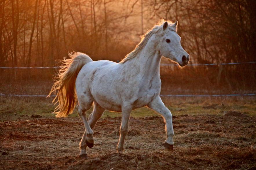 Jedes Pferd muss passend bewegt werden, gemistet, getränkt und gefüttert werden - auch während einer Pandemie.