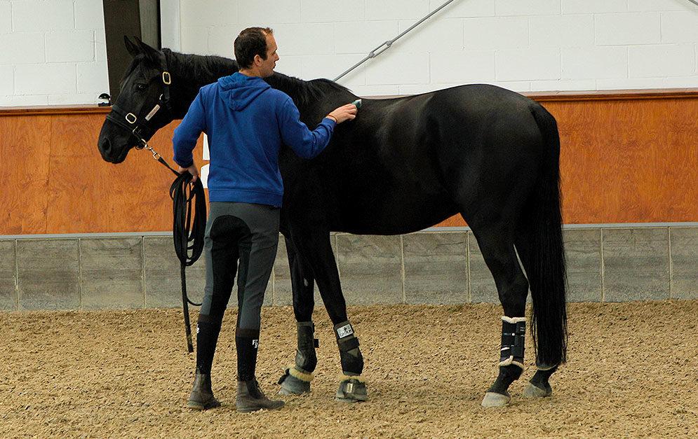 Bei manchen Pferden ist scheren gar nicht so einfach - denn das laute Geräusch der Schermaschine macht ihnen Angst. Unser Experte Luuk Teunissen weiß Rat.