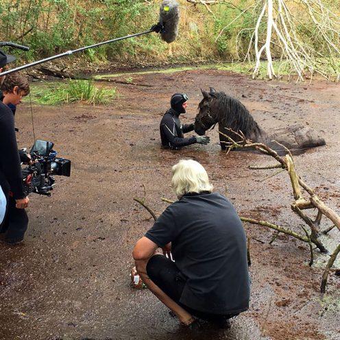 """Wenn Pferde vor der Kamera stehen: Das Pferd als """"Rampensau"""" – kann auch mein Pferd ein Filmstar werden? Welche Voraussetzungen sind nötig und wie lange dauert die Ausbildung? Die Antworten findest du hier!"""