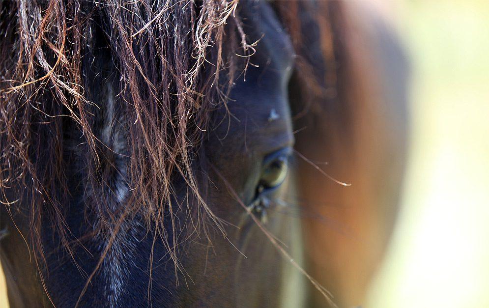 Burn-out beim Pferd