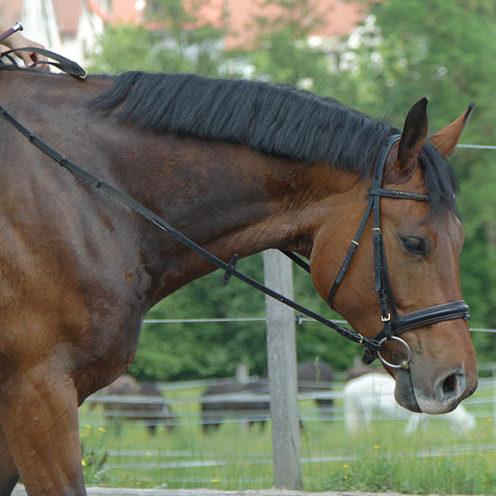 Das Reiten von Kreisbögen mit geringem Durchmesser stellt eine besondere Herausforderung dar, denn das Pferd muss mit zunehmend geringerem Radius vermehrt geschlossen und ausbalanciert sein.