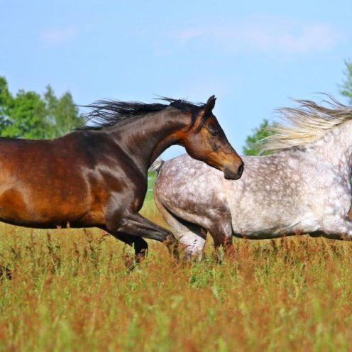 Welche Pflanzen für die Pferdeweide? Wieso Weidelgras wenig geeignet für Pferde ist und wie du deine Koppel aufwerten kannst, gibt es hier für dich.